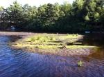 Bog on East Emerald Lake
